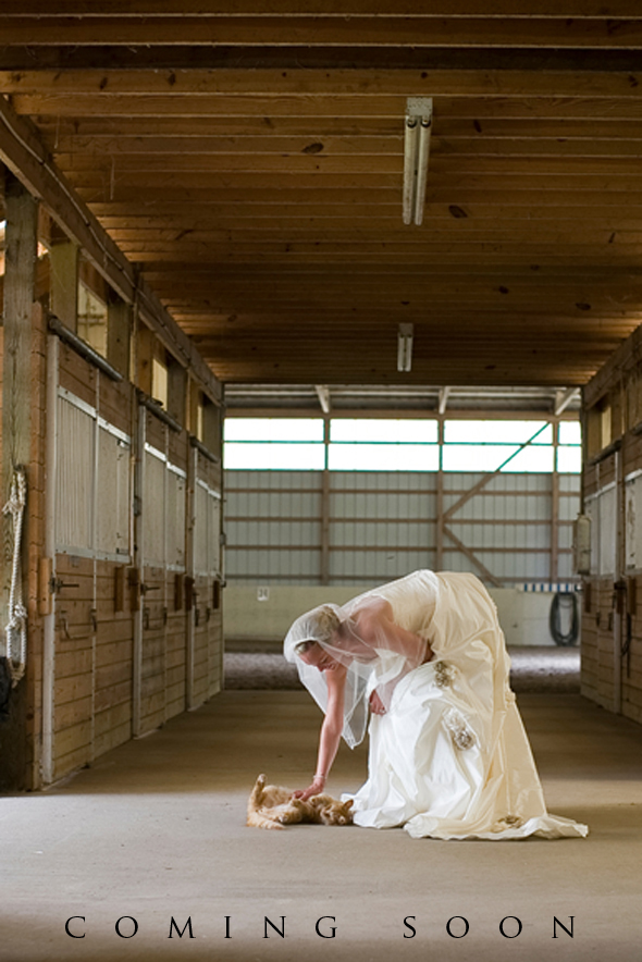 horse ranch weddings