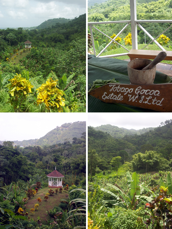 Tobago Cocoa Plantation Tour