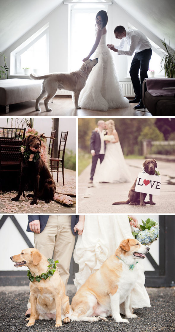 Dogs In Weddings | Dogs At Destination Weddings The Destination Wedding Blog Jet
