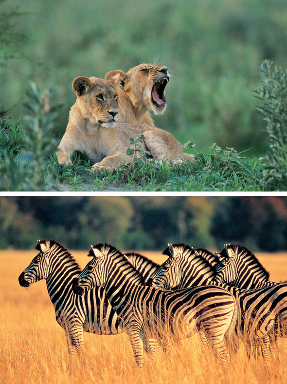 safaris in africa African Safari Planner