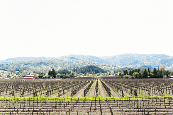 wine country wedding St. Helena Destination Wedding