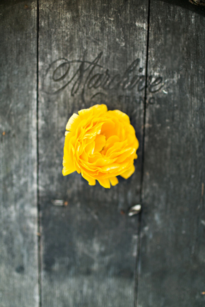 yellow and grey wedding St. Helena Destination Wedding