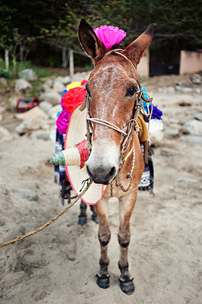 mexico wedding donkey