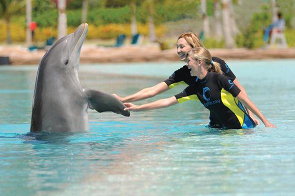 dolphin encounter atlantis