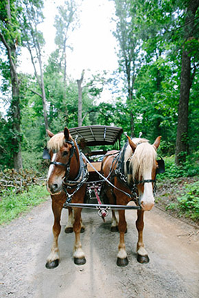 horses at the biltmore estate engage Destination Wedding Welcome Bag Ideas from Engage!13