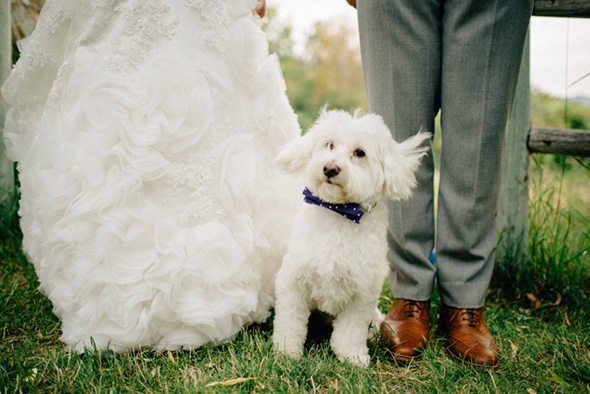 wedding dog ideas