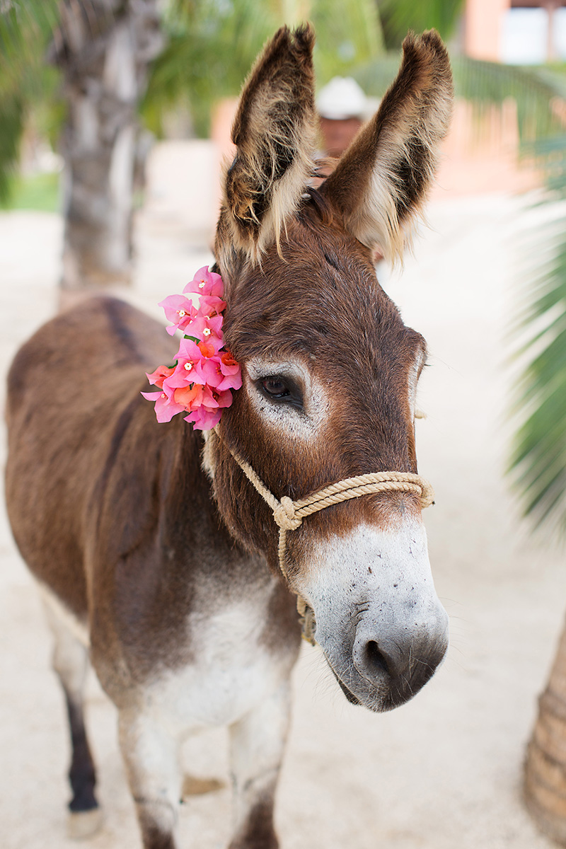 donkey-wedding-ideas