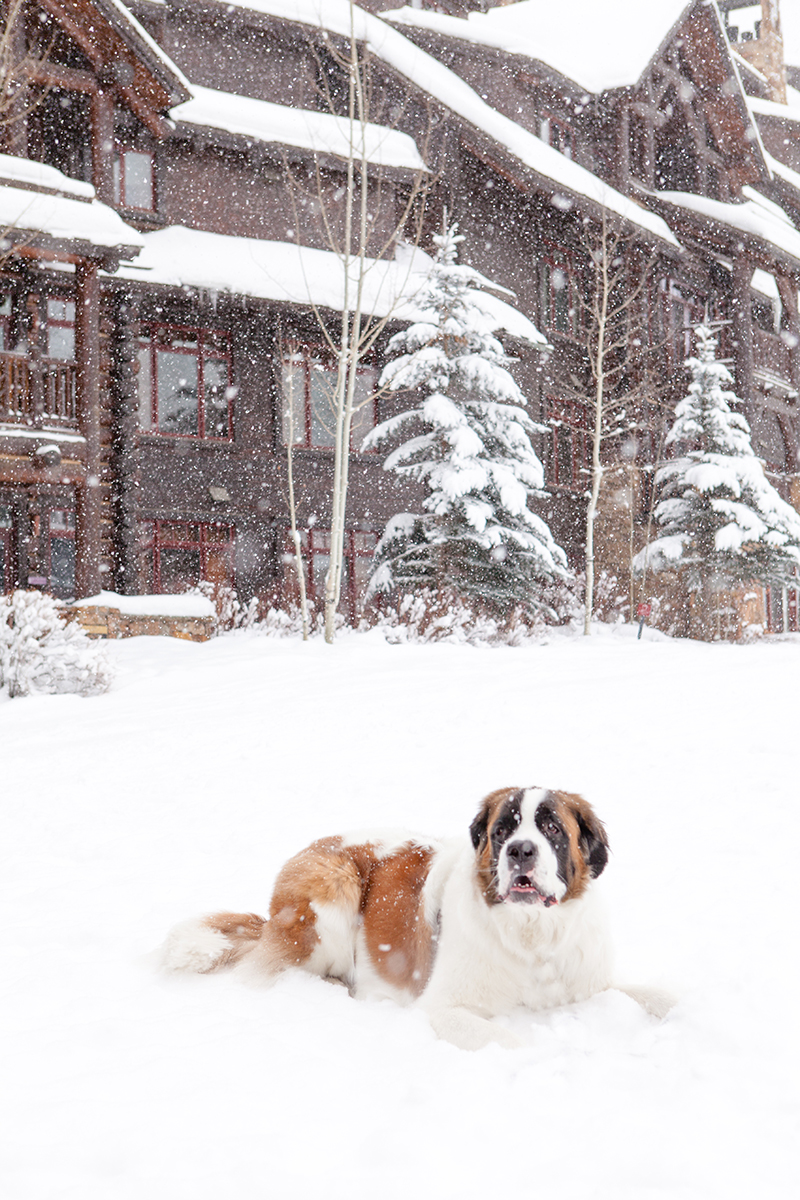 dog-friendly-colorado-resorts