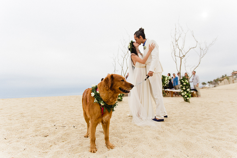 dog-in-weddings