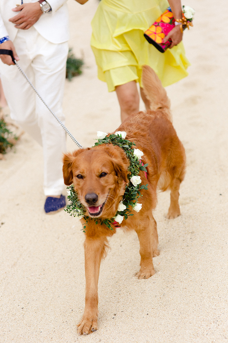 dog-wedding-details
