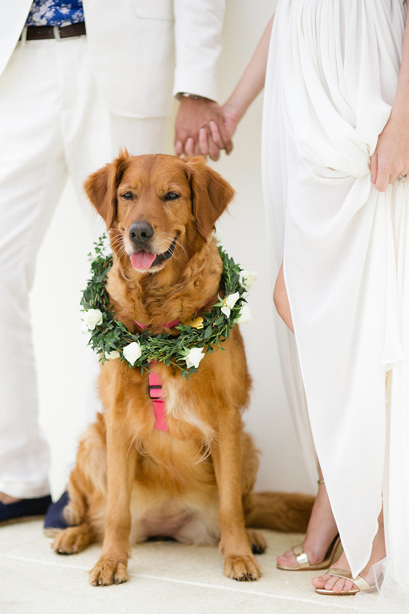 dogs-in-weddings