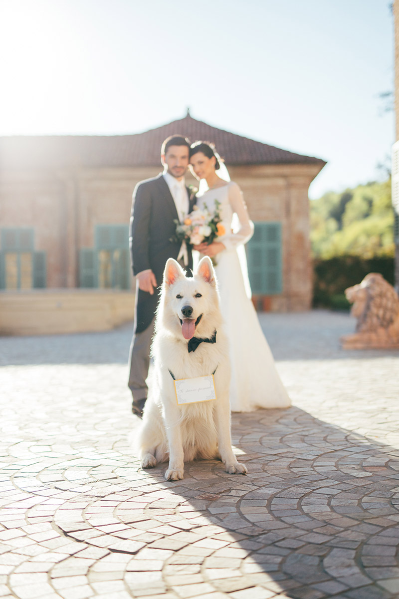 dog in weddings